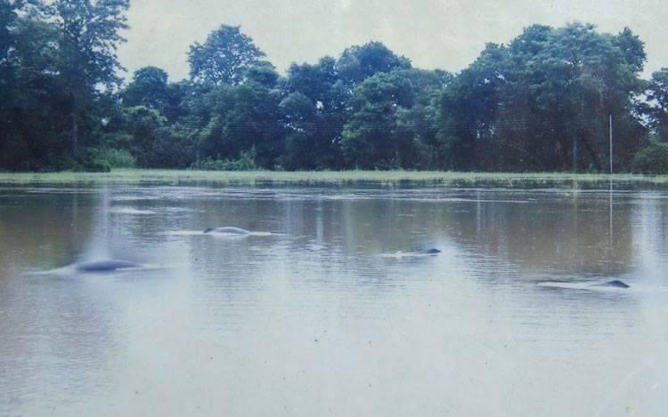गाँउपालिकाले पारित गर्देैछन जलचर एवं जलीय जैविक विविधता संरक्षण नीति