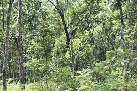 आम्दानीको स्रोत बन्दै सत्ती कर्णाली सामुदायिक वन